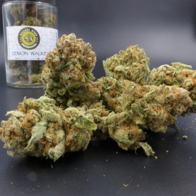 Lemon Walker Bulldog Weed Spokane