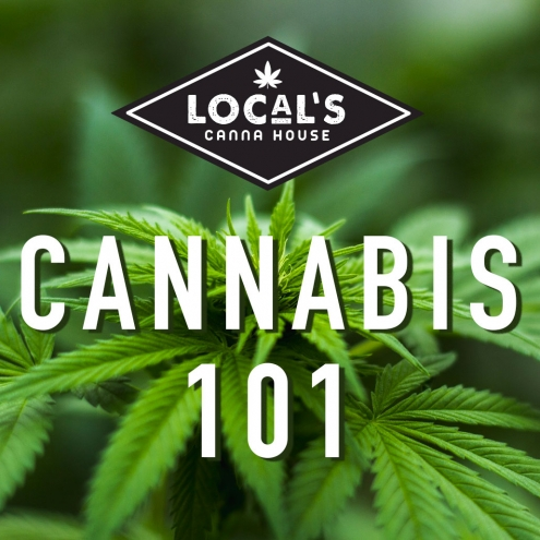cannabis-basics-spokane